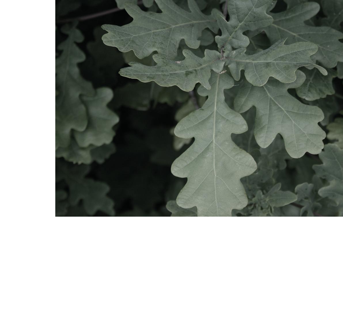 leaves-body