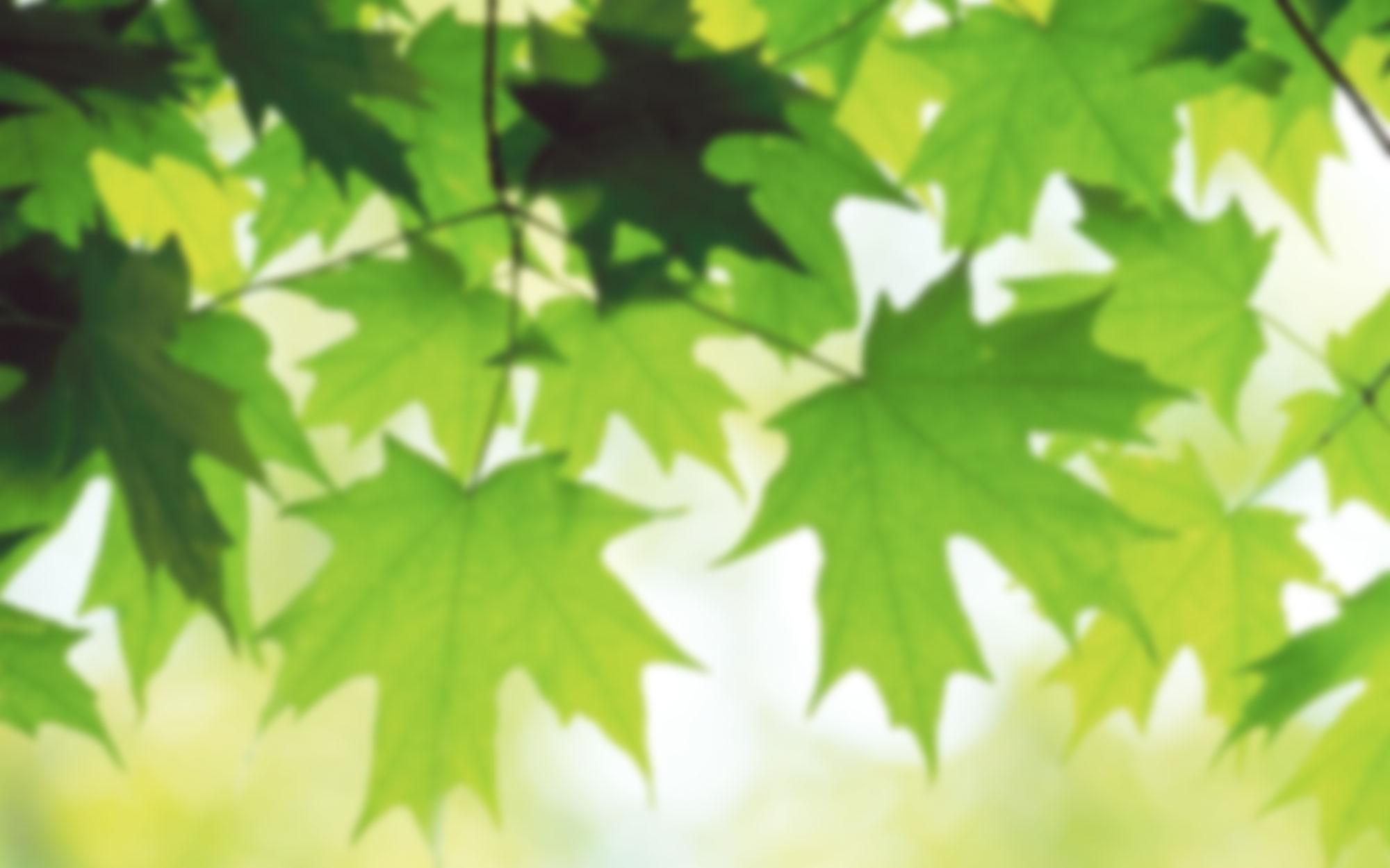 Summer-Leaves-blur